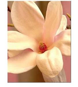 La Vie de la Rose Angel Wings: The Prayer Solution Flower Essence